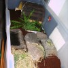 Mr. / Ms. Torty Underbitty old indoor enclosure Version 1 of 3