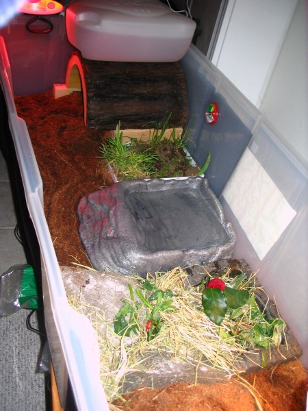 Mr. / Ms. Torty Underbitty old indoor enclosure Version 2 of 3