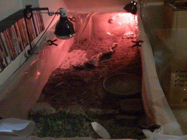 Mr. / Ms. Torty Underbitty new indoor enclosure - night time