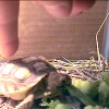 Mr. / Ms. Torty Underbitty as a baby