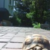 Mr. / Ms. Torty Underbitty in the backyard