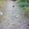 Mr. / Ms. Tortoise Underbite camping!