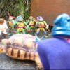 Mr. / Ms. Tortoise Underbite with his Ninjas!